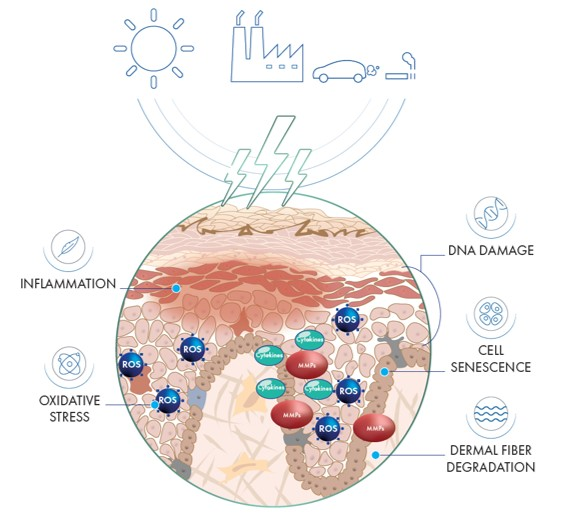 Pollution effect on the skin