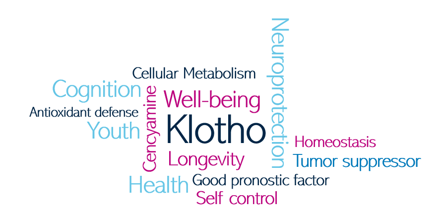 Klotho protein benefits