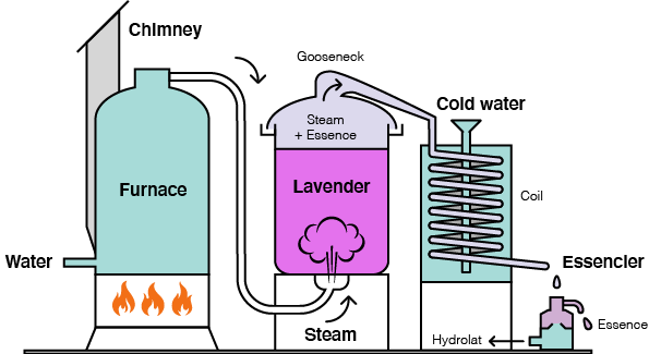 Distillation process essential oil